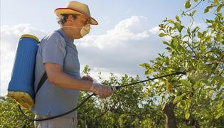 Somers Tree Health