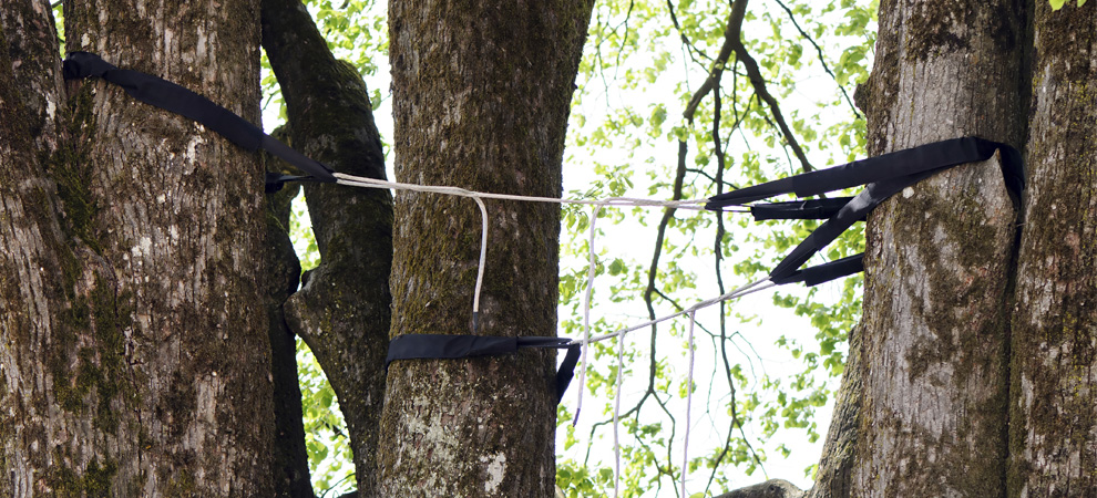 Yorktown Heights Tree Cabling and Bracing