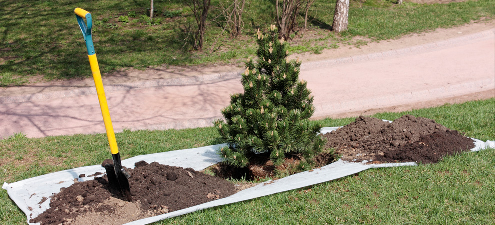 Somers Tree Planting