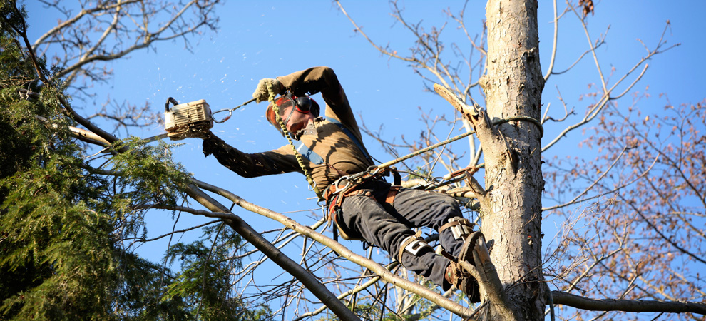Somers Tree Pruning