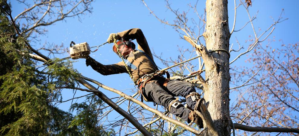 Yorktown Heights Tree Pruning